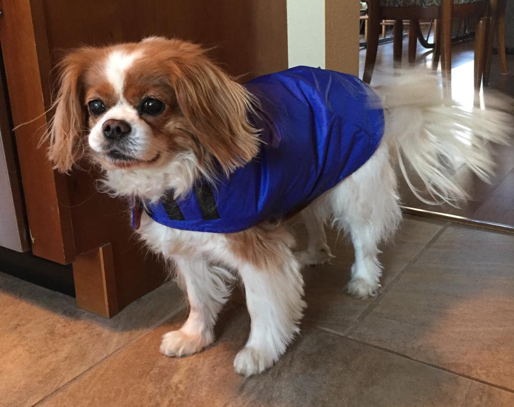 Hand Made Dog Coat Reviews