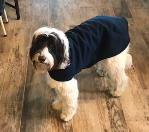 Custom Dog Coats