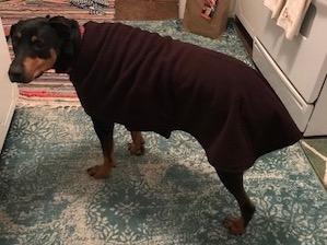 dog coats reviews