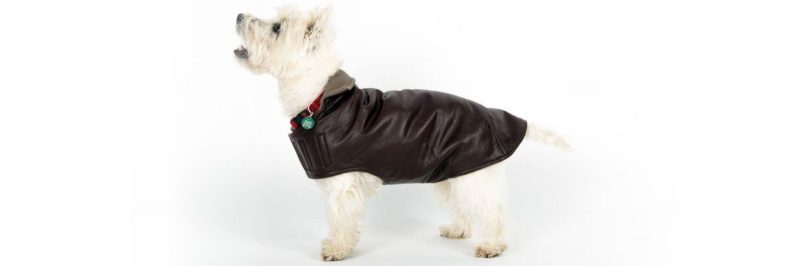 Dog Coat for Winter