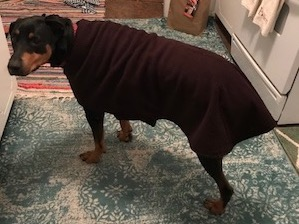 dog coats reviews