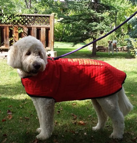powershield dog winter coat